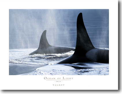 Ocean of Light - Orcas
