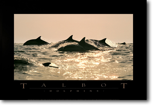Dolphins - TALLP05