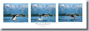 Ocean of Light - South Island Suite