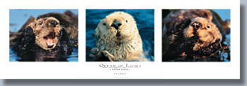 Ocean of Light - Otter Suite